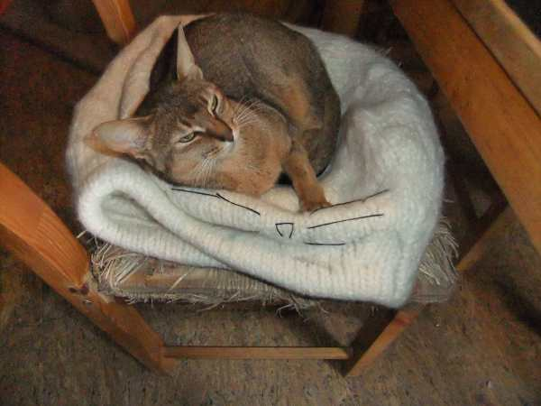 Katzenhöhle Stricken Und Filzen Katzen Forum Bergkatzen