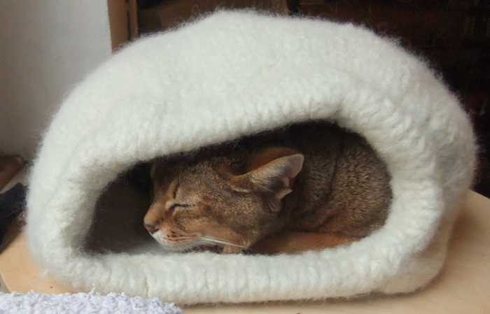 Stricken Für Katzen Desleutelbenjezelf Blog